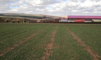 Pohled na ošetřené pole 2